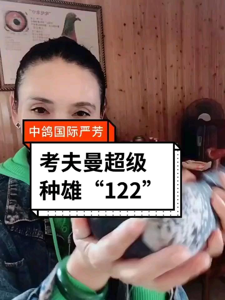 """中鸽国际考夫曼超级种雄""""12"""